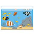 exotic fishes in aquarium vector image vector image