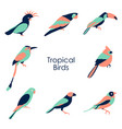 Tropical birds icon