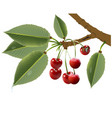 funny leaves with cherry vector image