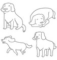 set of dog golden retriever vector image