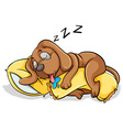 A dog sleeping with a pillow vector image