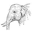 indian elephant vintage vector image