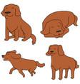 set of dog golden retriever vector image vector image