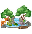 background scene waterfall and animals vector image vector image