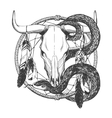 Bull skull with feathers snake and dreamcatcher vector image vector image