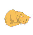 cat color vector image vector image