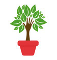 green tree with leaves inside flower pot vector image vector image