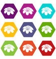 lily flower icons set 9 vector image