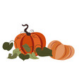 ripe big pumpkins with leaves autumn harvesting vector image vector image