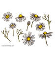 set hand drawn colored chamomile vector image