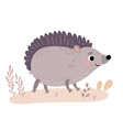 cute hedgehogs characters vector image vector image