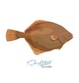 olive flounder sea fish vector image vector image