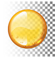 realistic honey drop on transparent vector image vector image