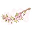 Sakura cherry branch vector image vector image