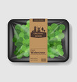 watercress salad leaves with plastic tray vector image vector image
