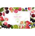 berry horizontal banner vector image