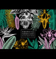 exotic flora frame tropical plants exotic flowers vector image vector image