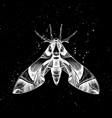 hand drawn oleander hawk moth mystic entomo vector image vector image