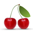 realistic cherry isolated on white background vector image vector image