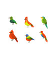 tropical parrots collection beautiful bright vector image