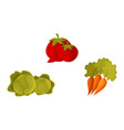 cartoon vegetable set - tomato carrot and cabbage vector image