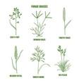 forage grasses set vector image