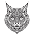 Hand drawn graphic ornate bobcat vector image