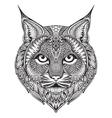 hand drawn graphic ornate bobcat vector image