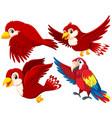 set of red bird vector image