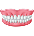 Cartoon model of teeth isolated on white backgroun vector image vector image