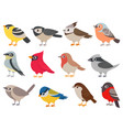 cute birds hand drawn little colorful birds vector image