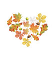 heart of colorful autumn leaves isolated on white vector image vector image