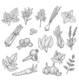 herb spice and seasoning sketches vector image