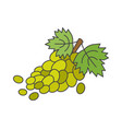 branch of green grapes flat icon vector image vector image