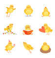 cute chicken in various situations trying to vector image vector image