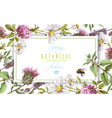 herbal horizontal banner vector image