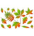 set collection beautiful colorful autumn leaves vector image