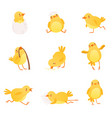 set of funny yellow chicken in various situations vector image vector image
