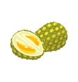 Durian Flat Sticker vector image