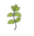 peppermint plant ingredient to condiment of food vector image vector image