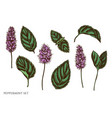 set hand drawn colored peppermint vector image vector image