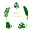 set of tropical green leaves with frame vector image