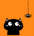 cat face head looking at hanging spider insect vector image vector image