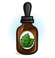 peppermint essential oil vector image vector image