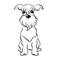 sketch Miniature Schnauzer dog sitting vector image vector image