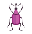 Beetle flat insect bug in cartoon style vector image vector image