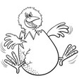 cartoon little chick hatching from egg coloring vector image vector image