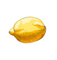 hand drawn sketch lemon in color isolated on vector image vector image