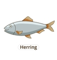 Herring underwater animal cartoon vector image vector image