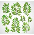 set branches with green leaves vector image
